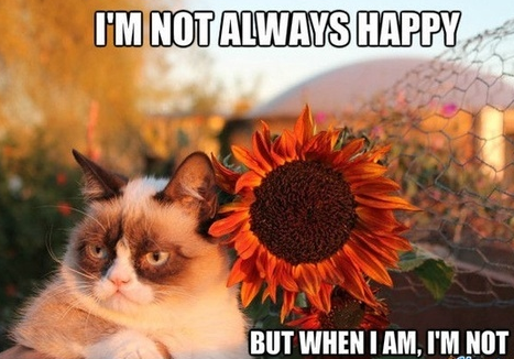 Oh, Grumpy Cat! Happy Friday!