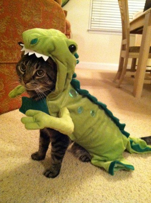 Dino-chat!