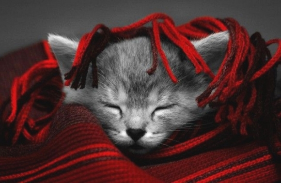 Snuggle kitty is trying to stay warm!