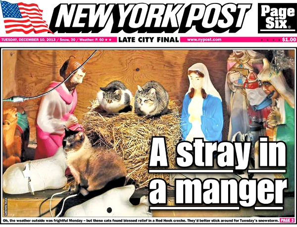 Check out the cover of today's  New York Post !
