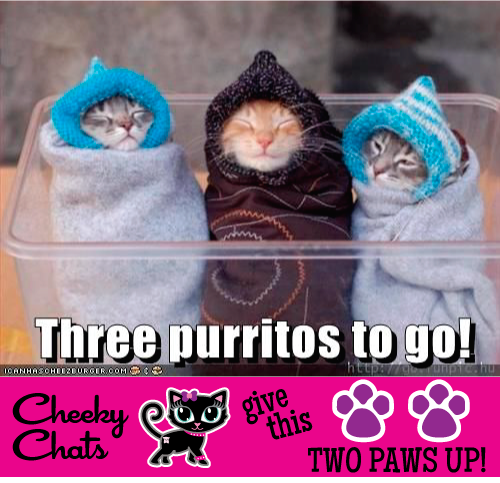 Two Paws Up! - Cute Cat Alert! - The Cheeky Chats Love these little Purritos!!  Three bundles of kitty cuteness!!