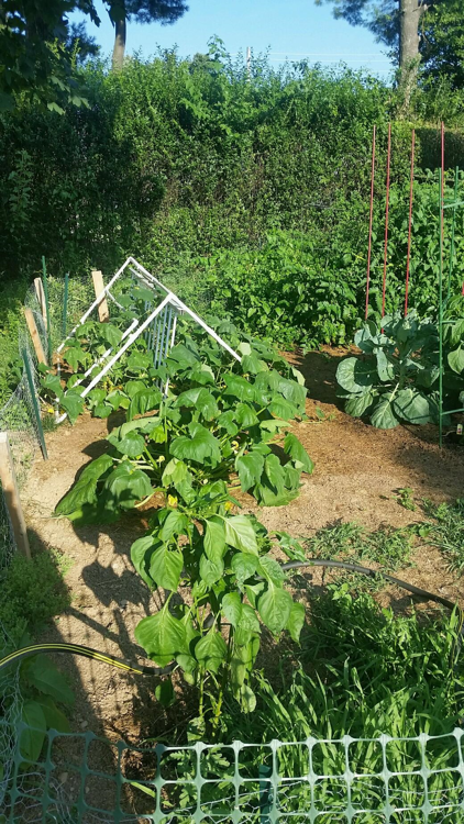 0MG Garden 07-20-16.png