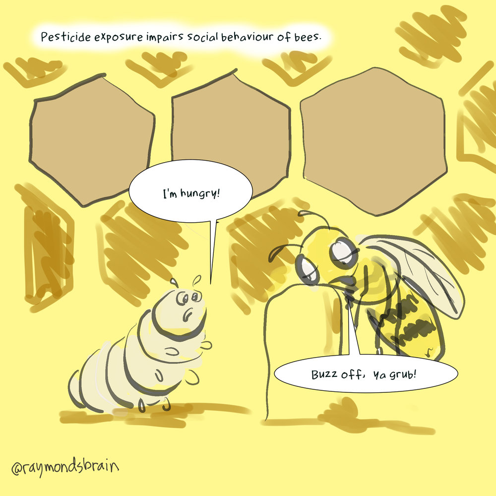 181112 bees.jpg