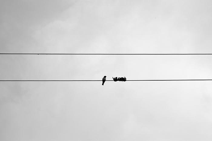 Birds huddling together against the wind.