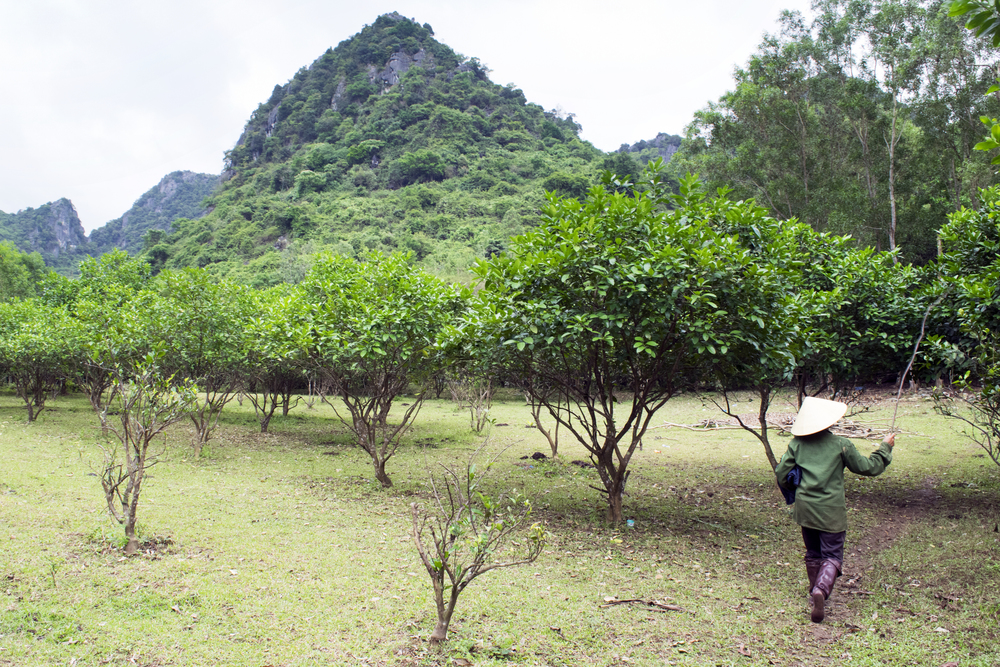 Phong Nha-Ke Bang National Park, Vietnam 2015