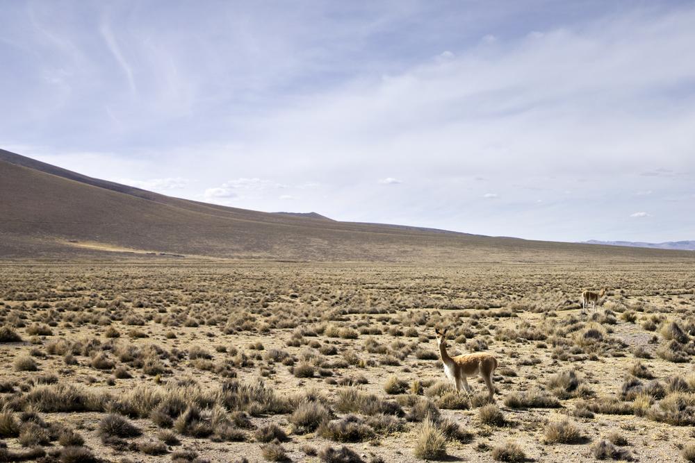 Chivay, Peru 2016