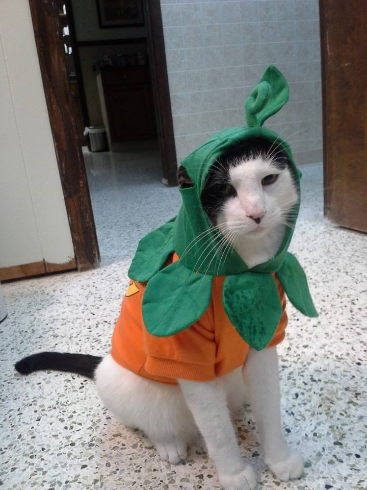 Jester is not amused about being a pumpkin.