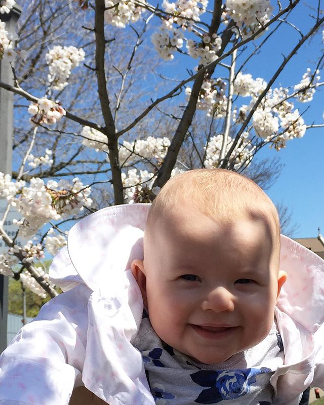 Spring is here! 🌸🌸🌸 #mabiebaby #babyinthepark #cherryblossoms