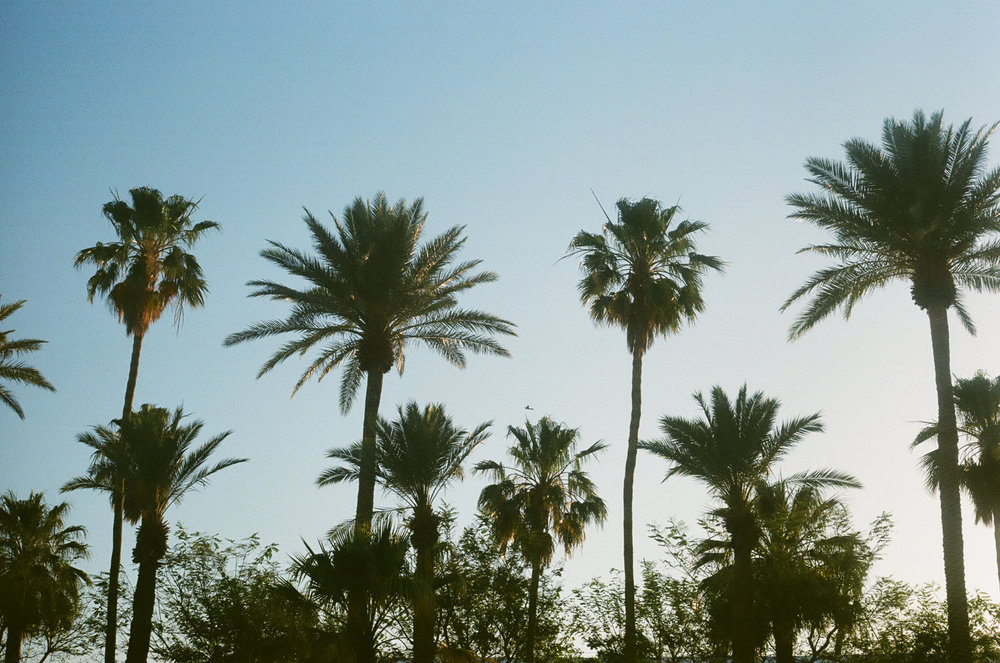 PLNT_MAG_COACHELLA_PHOTOS_3.JPG