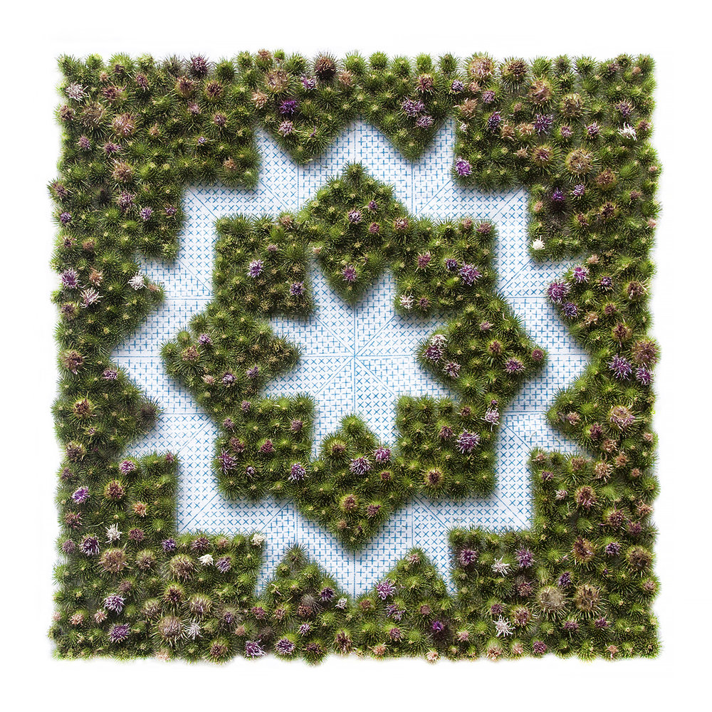 Burdock Needlepoint , 2018. Burdock burs, needlepoint pattern. Archival pigment print, 18x18 in.