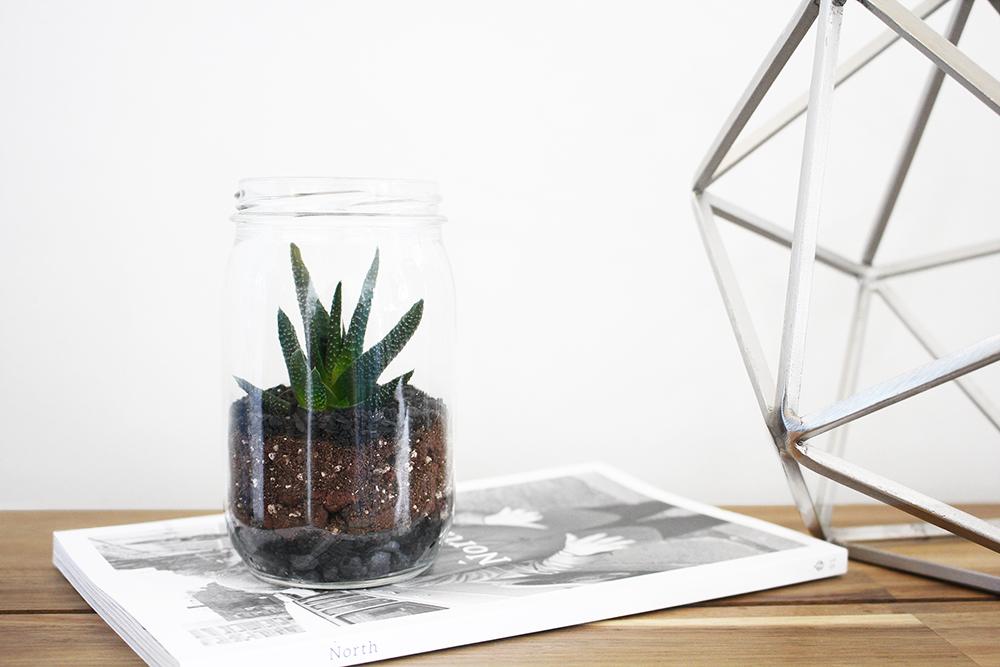 Logan Nolin Mason Jar Terrarium