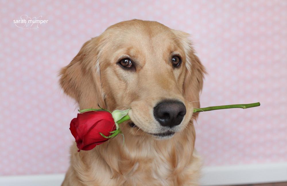 {Lucy's Valentine's Day}-5.JPG