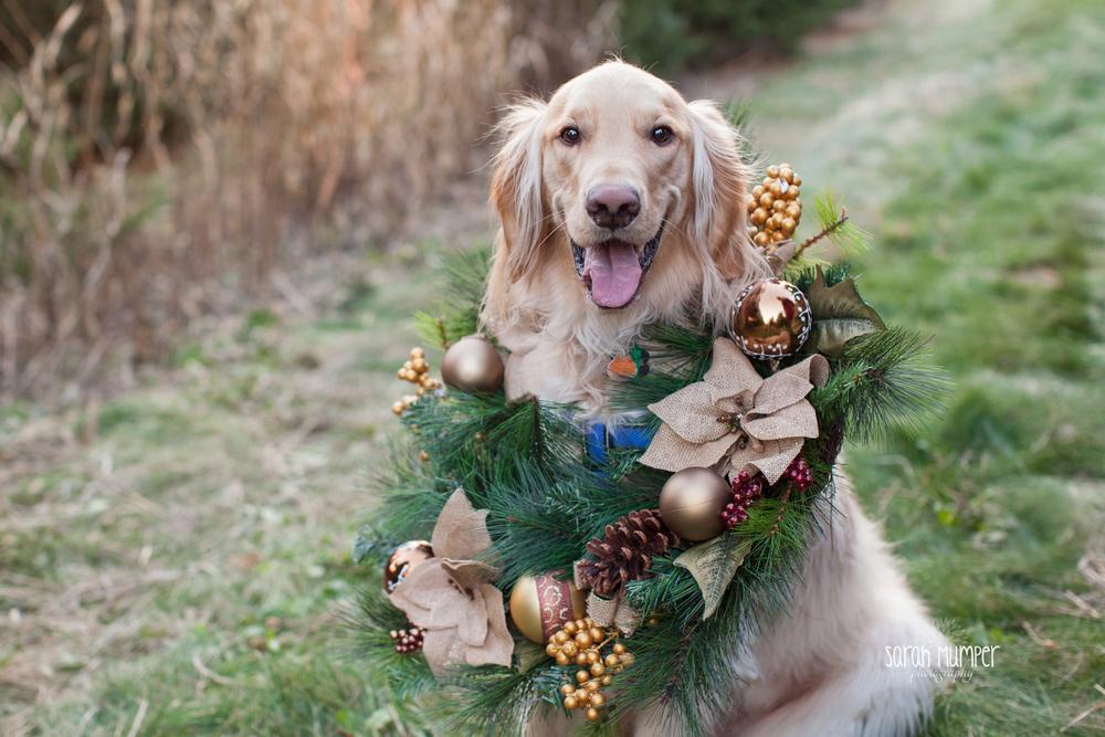 Shue Family Christmas - blog-23.jpg