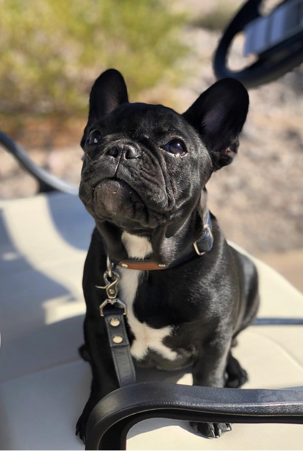 @fin_thefrenchie