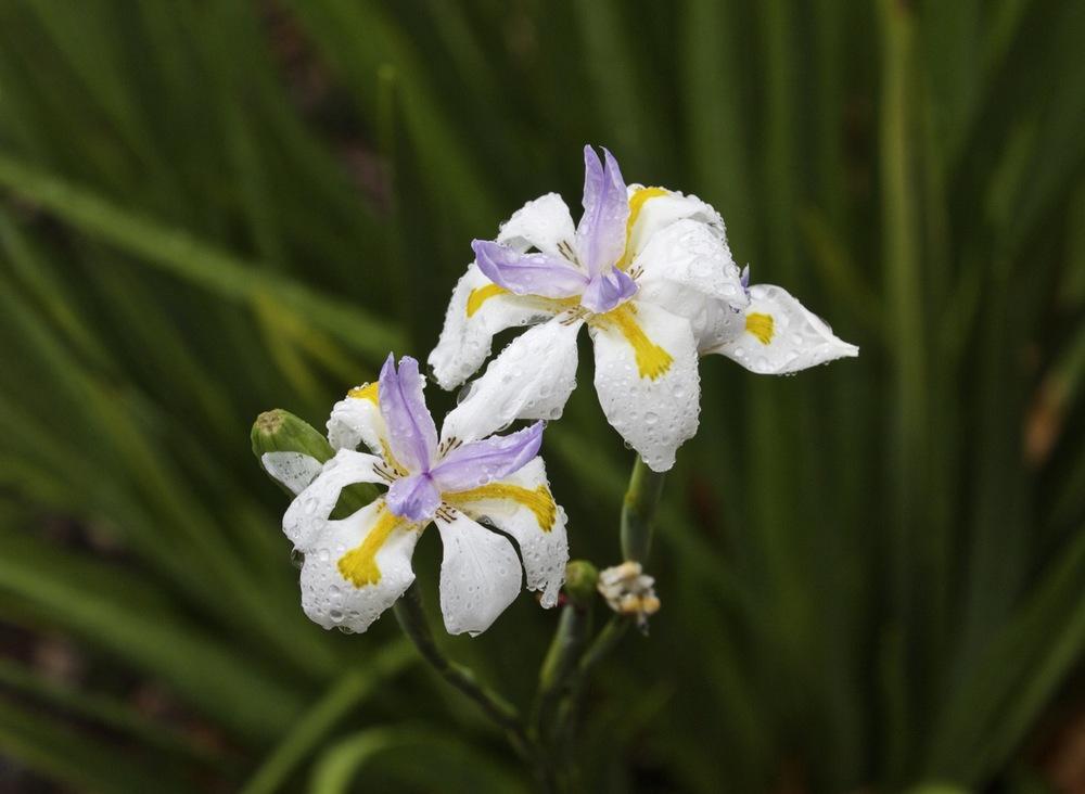 Raindrops on flowers
