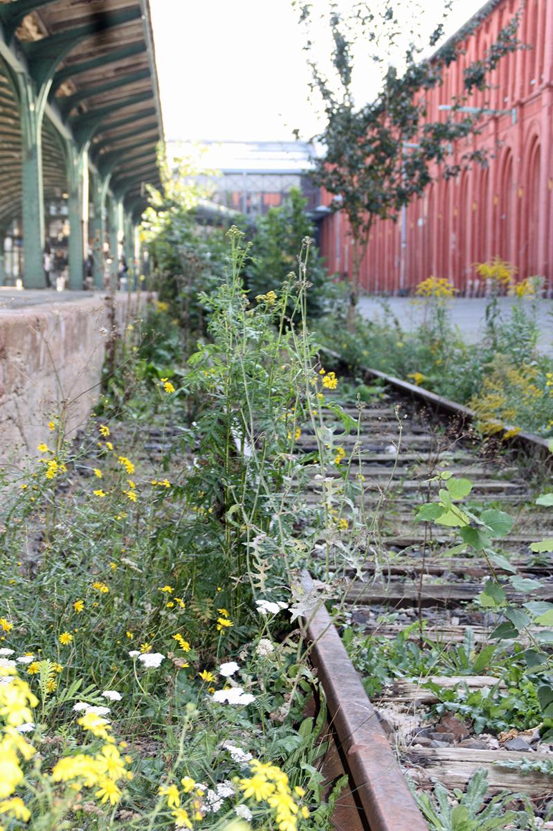 Verwucherten Gleis 1 im Kulturbahnhof; © Stadt Kassel; Foto: Ina Michael