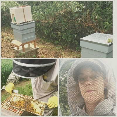 Collecting honey at Home Farm