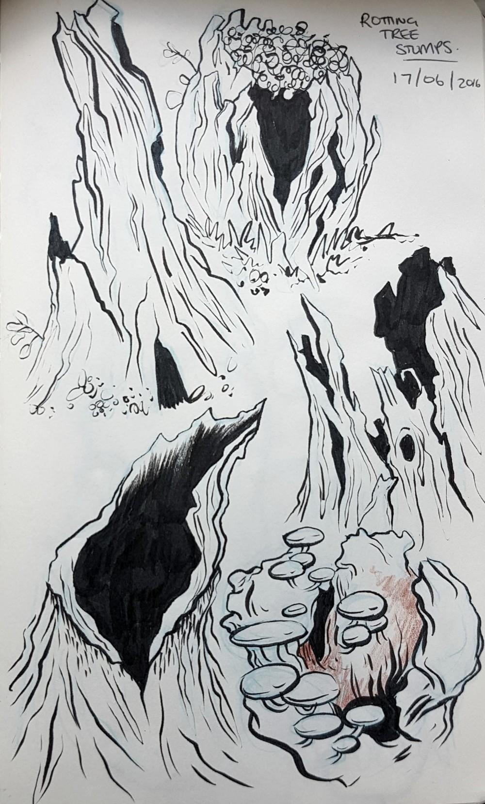 rotten_stumps.jpg