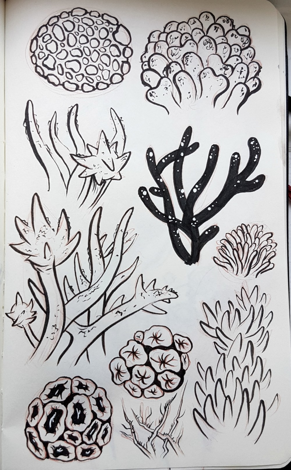 sea_plants.jpg