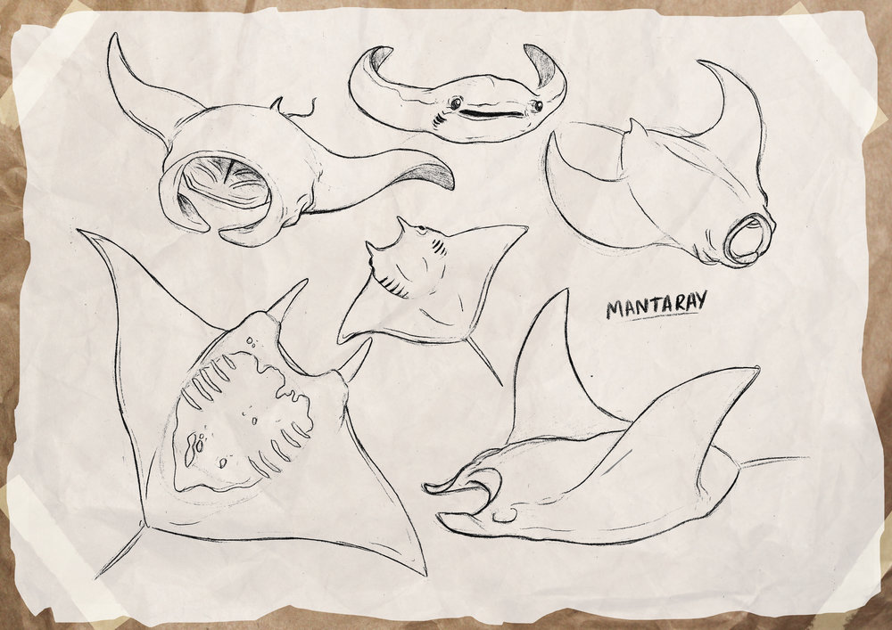 mantaray_studies.jpg