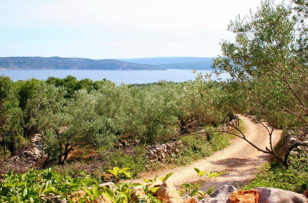 Road to beach (2).JPG