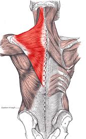 muscle pain neck headache chiropractic posture