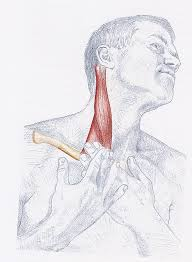 postura cuello dolor cabeza cuello