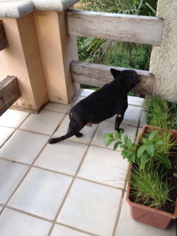 dog chiropractic animal hope restored veterinarian