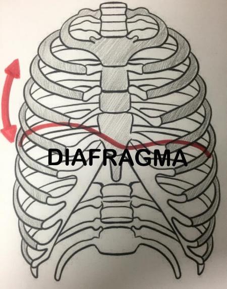 respirar columna vertebral  salud bienestar