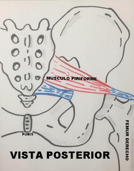 estiramiento músculo Piriforme espalda baja