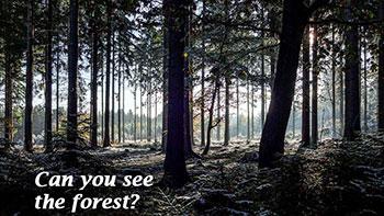 tree-3131177__480-pixabay-forest.jpg