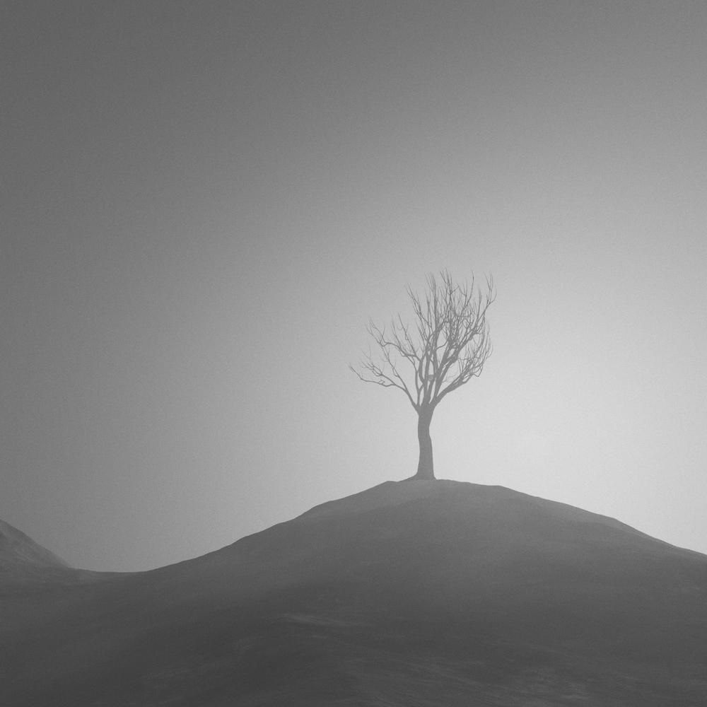 20120623_Lone_Tree.jpg