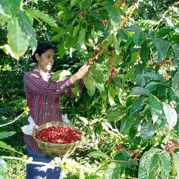 Rosa picking.jpg