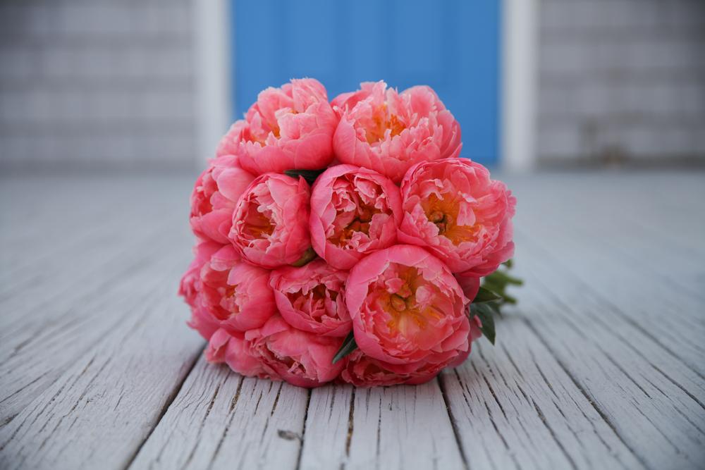 pink_coral_charm_peonies