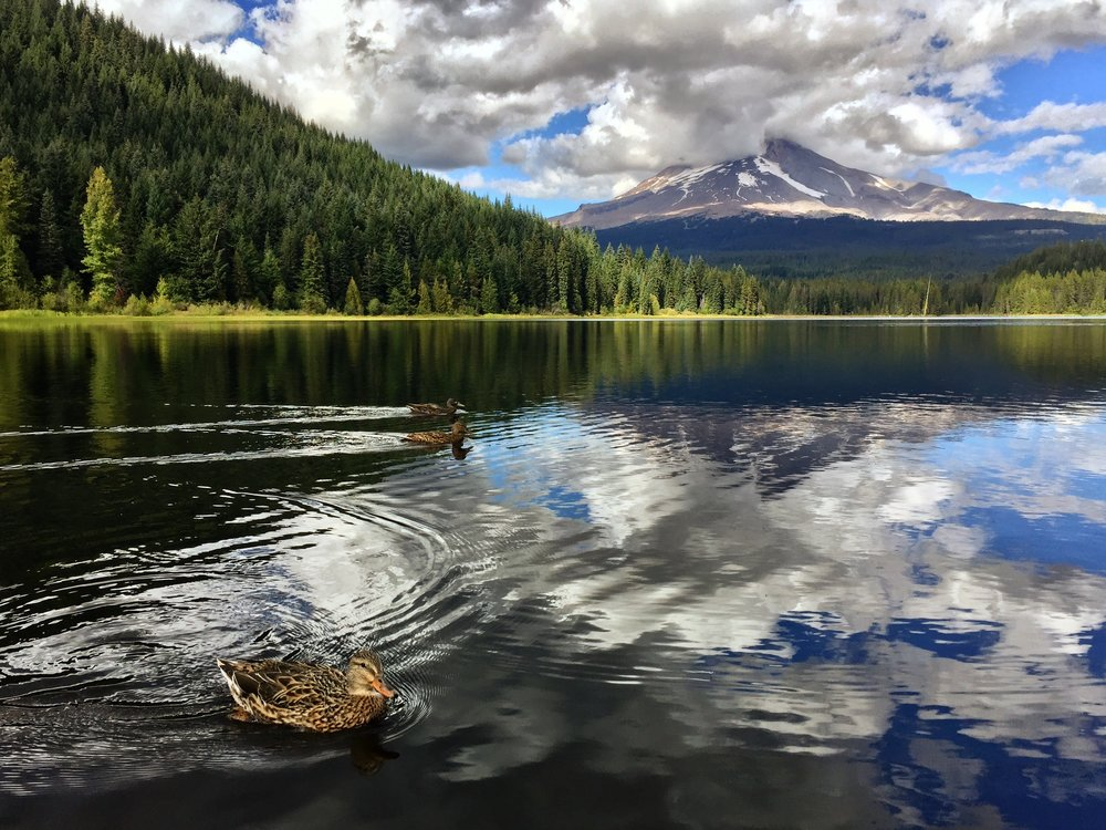 An iPhone shot of some ducks swimming in Trillium Lake with Mt. Hood in the background.