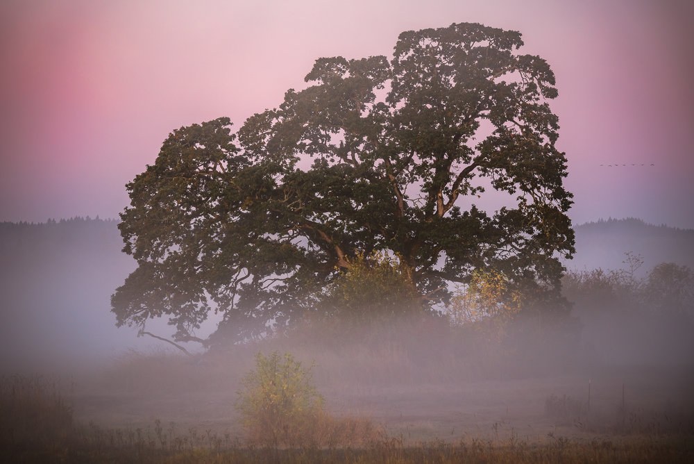Early in the morning when the tree was still completely engulfed in the fog.
