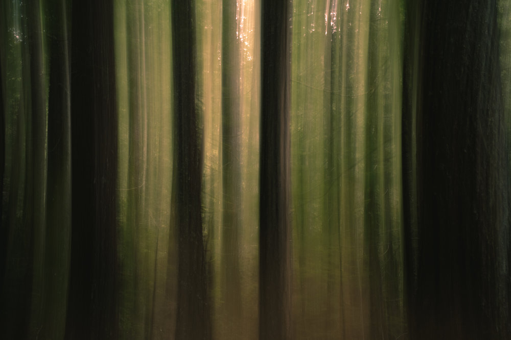 Abstract shot of trees with intentional camera movement.