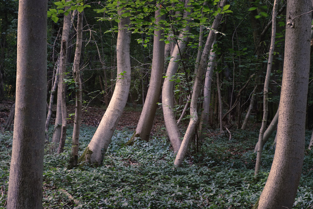 The curving trees are the subject of this image and hold it well.