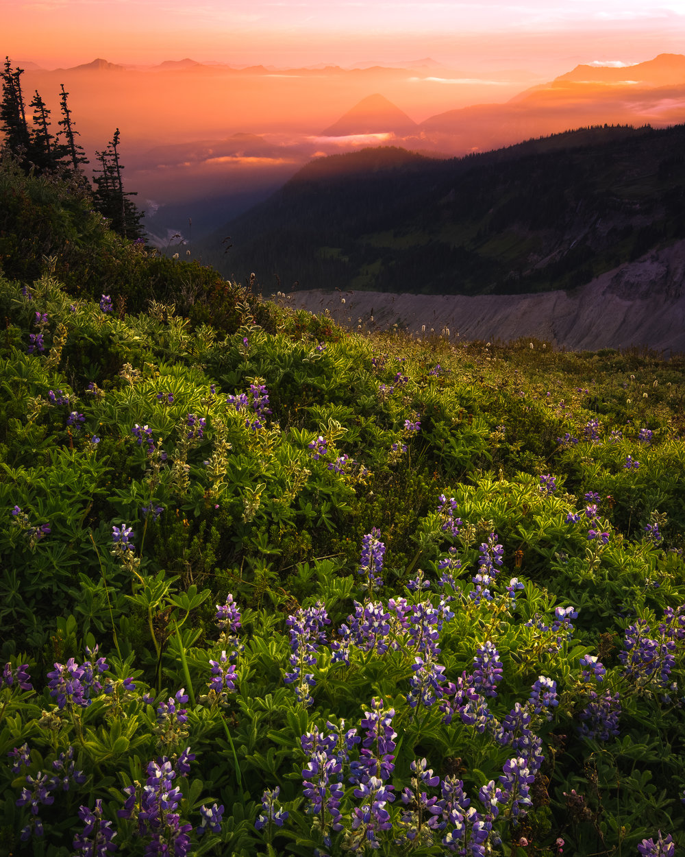 sunset wildflowers mt rainier