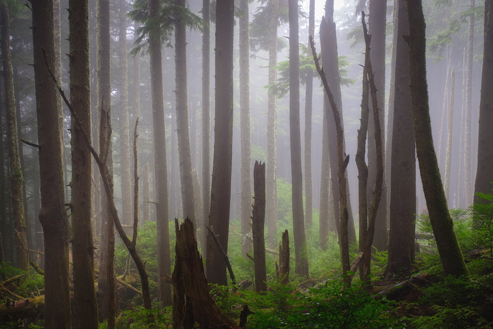 Without a focal point it allows the eye to wander the chaos in this photo in a foggy forest. You can see various components coming together to tell a story about the scene with dark broken trees in the foreground to fog and mystery to the green foliage showing signs of life on the forest floor. There is a lot going on without feeling too busy!