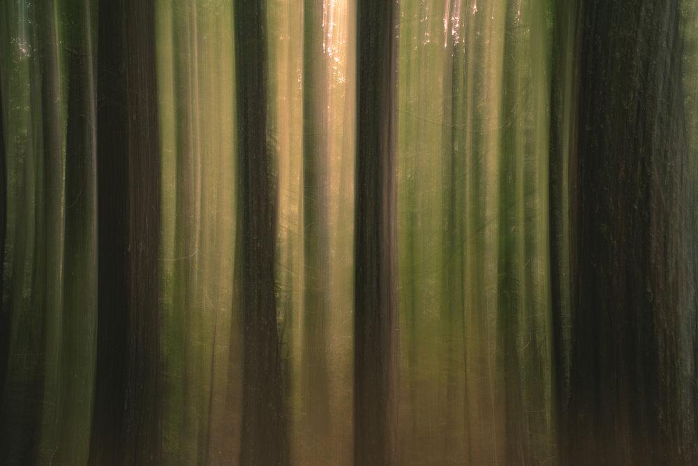 blurry tree