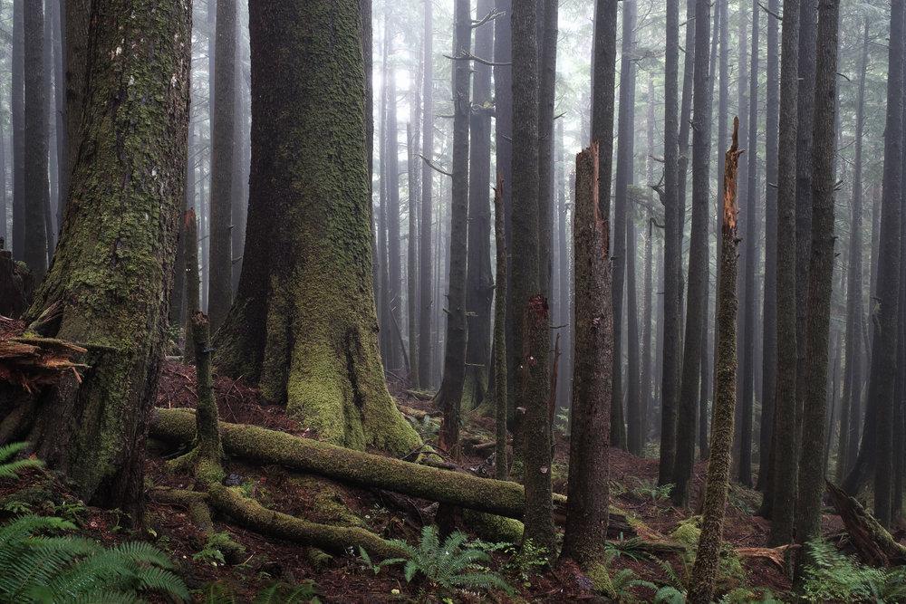 Foggy Forest Oregon Coast - Ecola State Park-2.jpg