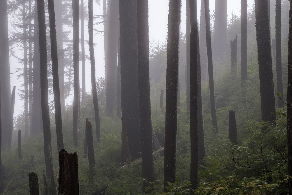 Foggy Forest Oregon Coast - Ecola State Park-4.jpg