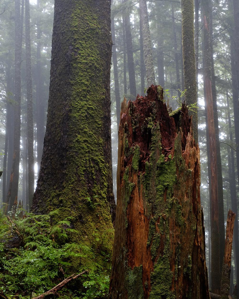 Foggy Forest Oregon Coast - Ecola State Park-3.jpg