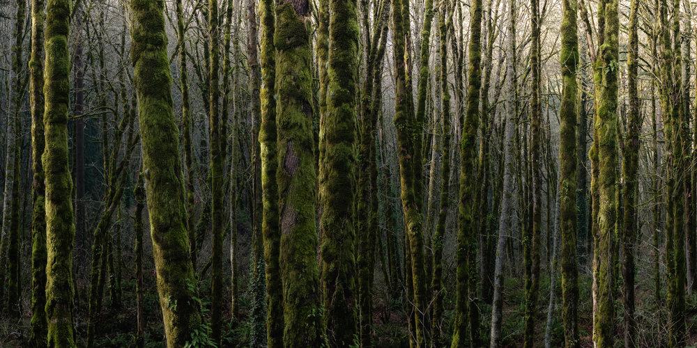 Portland Forest Online-2.jpg