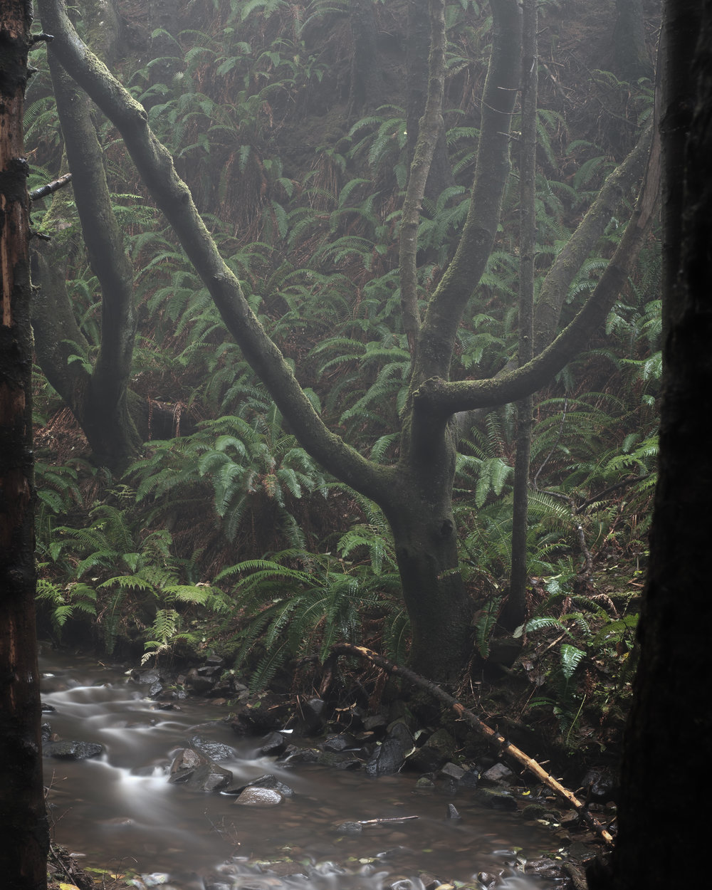 Foggy Forest Oregon Coast - Ecola State Park-6.jpg