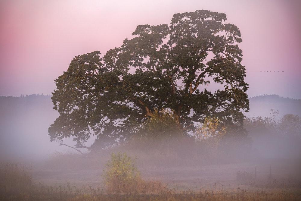 fog fruits-1.jpg