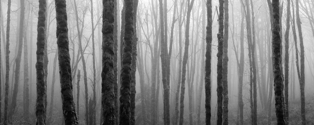 black and white foggy forest panorama
