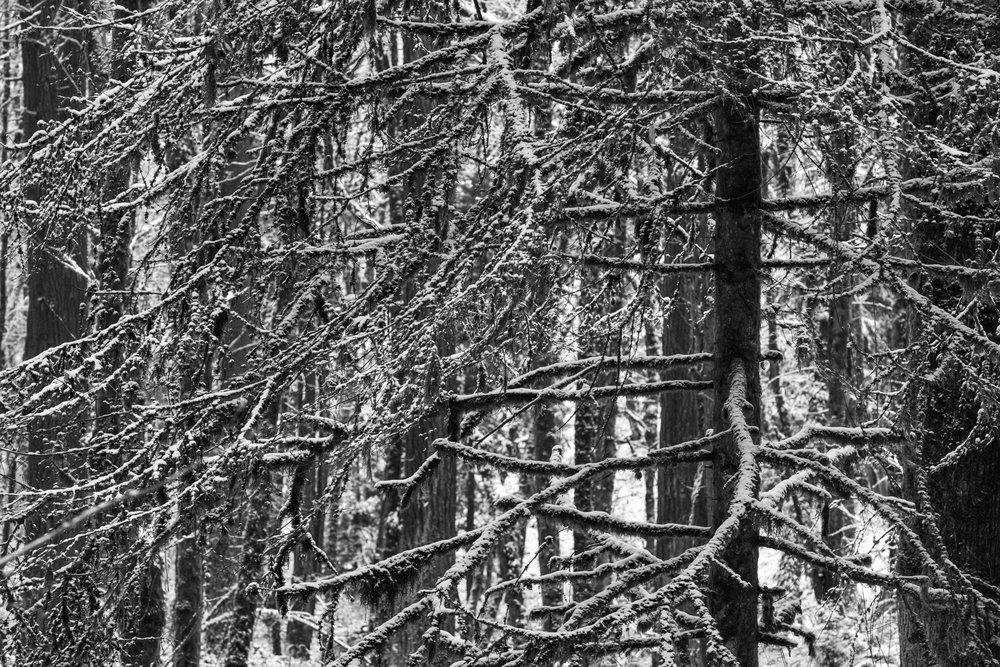 Snow Day PDX Online-5.jpg