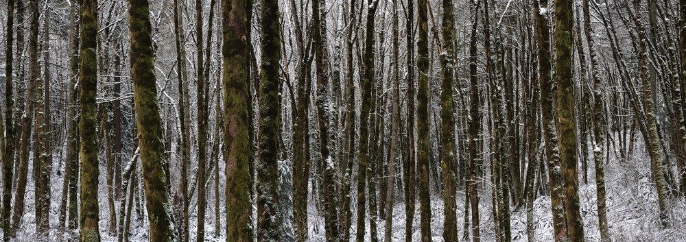 Snow Day PDX Online-2.jpg